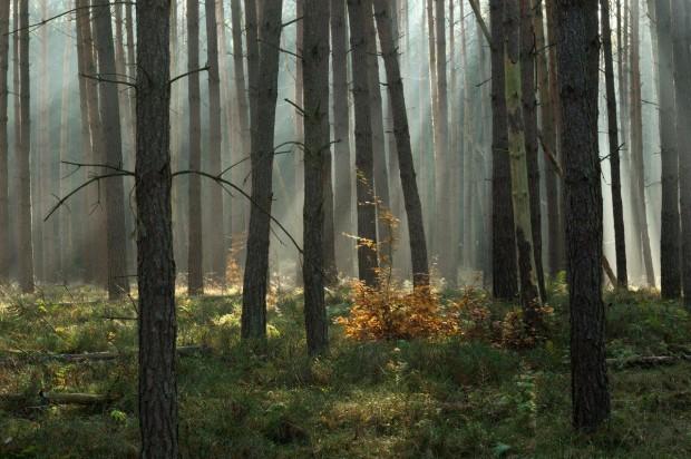 Wald am Langhagensee FotoMonikaLawrenz klein 620x412 Foto Workshop Frühlingslicht im Naturpark am 13./14. April 2019