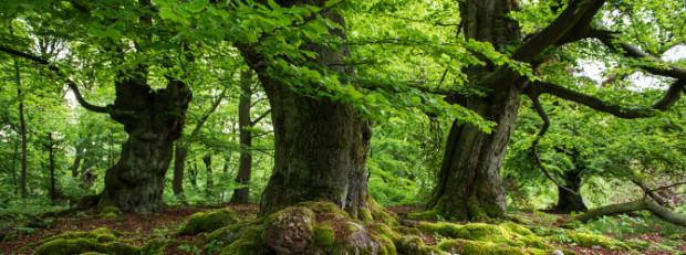 """Waldgeister C VDN Marcus Müller 620x231 Röbeler Unternehmen setzt """"Junge Riesen"""" in die Wälder"""