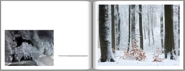 Winter Buchenwald 620x240 Ein Buch entsteht   jetzt spenden!