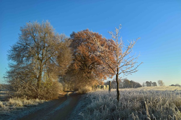 Winter klein 620x413 Gruß zum Neuen Jahr