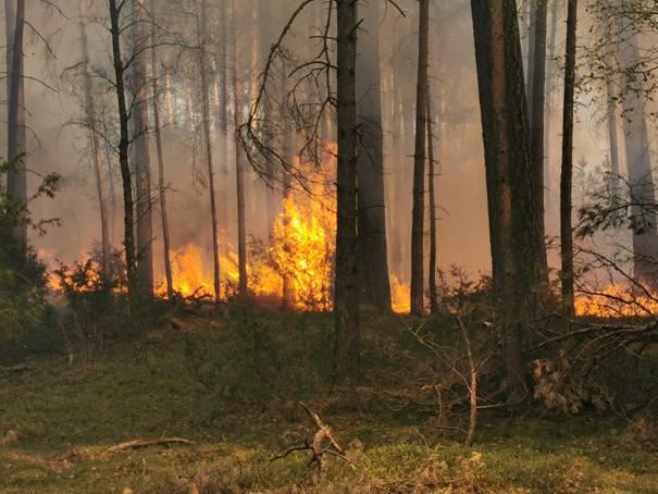 image0022 Waldbrand in der Schwinzer Heide
