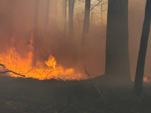 image0041 Waldbrand in der Schwinzer Heide