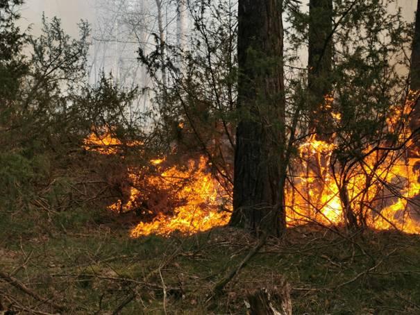 image0063 Waldbrand in der Schwinzer Heide