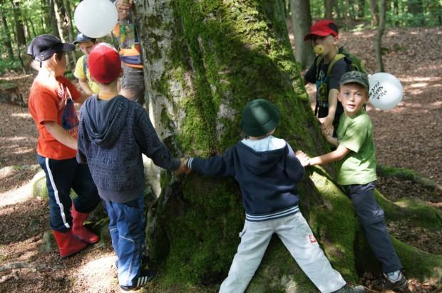 DSC02419 620x411 Von Bäumen und anderen Waldlebewesen