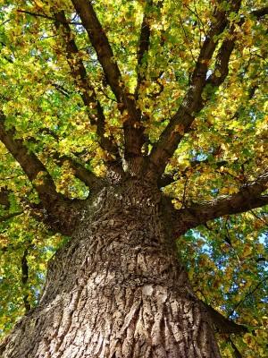 Eiche klein 300x400 Wald – ein Ruheort in unruhigen Zeiten