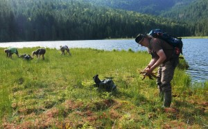 Beim Entfernen der Kannenpflanze  - © Naturpark OBW