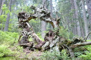 Durchblick im Wald
