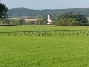 Vogelzug Regentalaue
