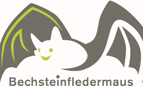 Bechstseinfledermaus Naturpark Rhein Taunus Die Bechsteinfledermaus