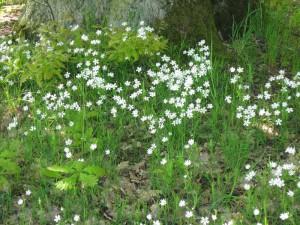 Frühling im Eichenwald