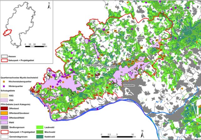 Naturparkgebiet Seltene Bechsteinfledermaus bekommt größeren Lebensraum