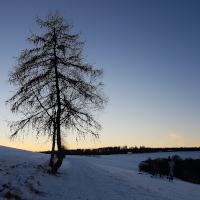 Winterbaum_Beitrag