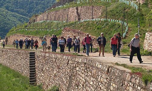 wandernweinberg beitzrag Erste Rheingauer Krimiwanderung erfolgreich