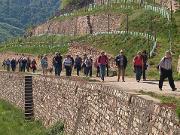 Wandern in Wingerten im Rüdesheimer Berg - Copyright: www.rheingau.de