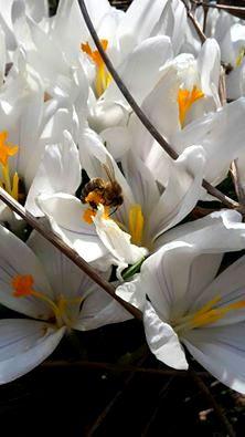 11011297 10202730703788759 6945926936814885408 n Führung durch das Agatal   Blumen und Kräuter im Frühling