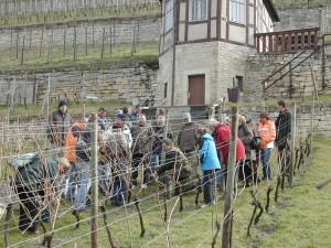 Rebschnittkurs im Herzoglichen  Weinberg in Freyburg (Unstrut)