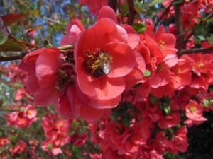 Bienenlehrgarten Nebra