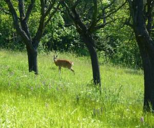 Hirschroder Graben - Wiese