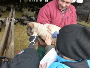 Besuch im Schafstall