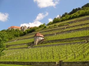 Herzoglicher Weinberg in Freyburg