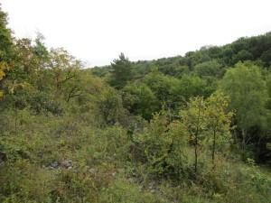 """Naturschutzgebiet """"Hirschrodaer Graben"""""""