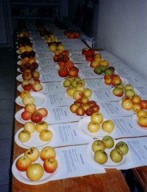Obstsortenvorstellung-Hölzer
