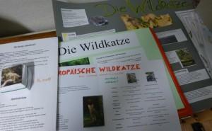 P1120466 ausarbeitungen sekundarschule 300x185 Die Wildkatze – Ein Wildtier kehrt zurück
