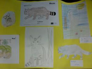 P1120483 ausschnitt wandplakat grundschule 300x225 Die Wildkatze – Ein Wildtier kehrt zurück
