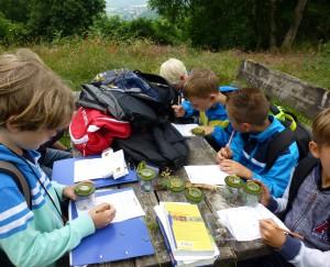 Pflanzen und Tiere der Wiese erforschen 300x243 Schulwandern    Natur erleben. Zukunft bewegen.