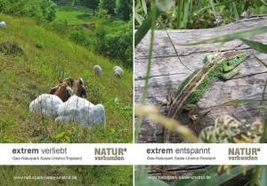 Postkarten extrem und artenreich 300x209 Naturschutzprojekt Trockenlebensräume