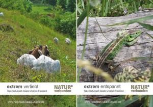 Postkarten extrem und artenreich
