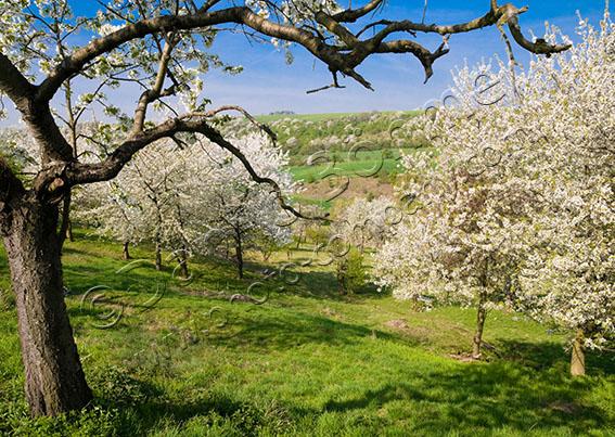 Streuobstwiese in der Dissau 18 Jahre Naturparkkalender! Der Geo Naturpark Saale Unstrut Triasland e.V. lädt ein zur Mitmachaktion