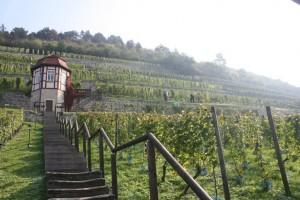 WWWochenende HWB 300x200 Wein Wanderwochenende   Wein und Stein (auf Voranmeldung)