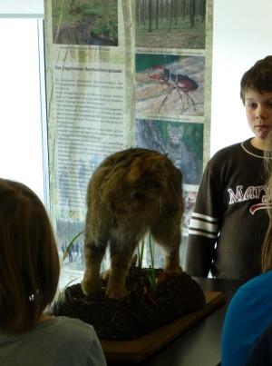 Wildkatzenausstellung 300x403 Wildkater Felix entdeckt?!