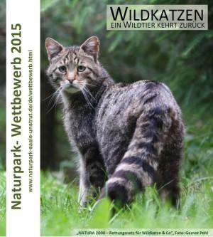 kleiner flyer 300x333 Wildkatzen Wettbewerb wird verlängert