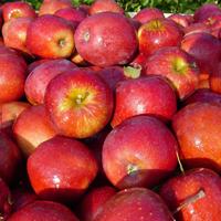 Regionale Produkte erfreuen sich zunehmender Beliebtheit (Foto: pixabay)
