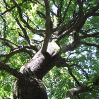 Alte Bäume_Übersicht