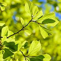 Vielfältige Pflanzenarten werden bei dieser Führung vorgestellt; Anregungen und nützliche Hinweise zur Bepflanzung des eigenen Gartens inkludiert (Foto: pixabay)