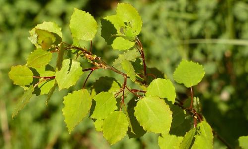 Blätter innen 23. August: Alles nur Grün?