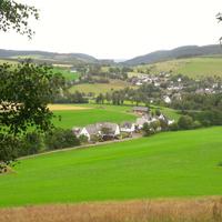 Mit etwas Glück können wir zwischen Gellinghausen und Westernbödefeld eine Mufflonherde sehen, die in der Gegend seit ca. 30 Jahren lebt (Foto: Alexandra Busch)