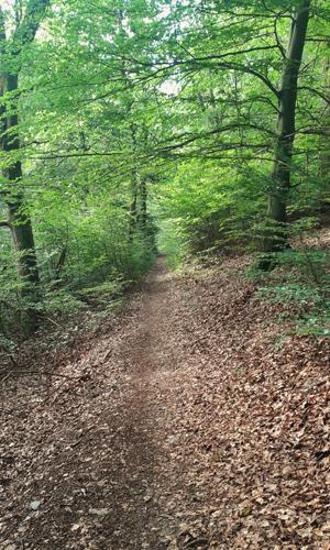 Busch innen1 12. September: Bödefelder/Westernbödefelder Sehenswürdigkeiten und Aussichtsrunde