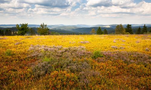 Entspannungsreise Natur innen 17. September: Tief hinab und hoch hinauf
