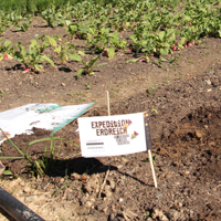 Direkt auf dem Gemüseacker sind Teebeutel vergraben. Weitere Standorte sind im Grünland und im Wald. (Foto: Naturpark Sauerland Rothaargebirge e.V.)