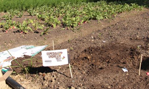 Expedition Erdreich innen Mit Teebeuteln den Boden erforschen