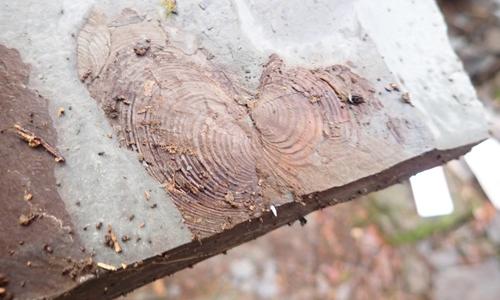 Fossilien innen Schulen und Kitas auf Entdeckungsreise in der winterlichen Natur