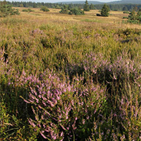(Foto: Naturpark Sauerland Rothaargebirge)