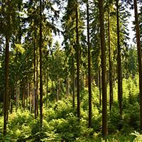 Foto_Übersicht_Bäume
