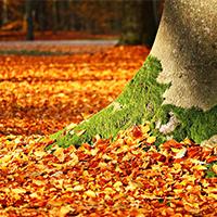 Foto_Übersicht_Herbst