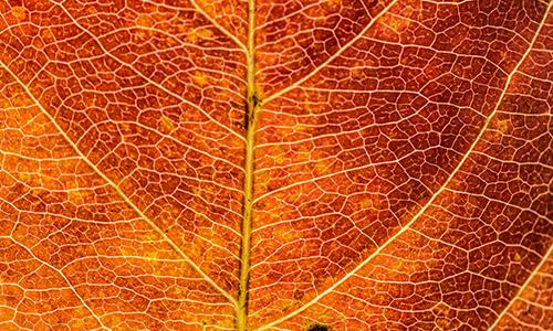 Foto Innenteil Herbst1 05. Oktober 2018: Sauerland Höhenflug Wanderung für Herbstliebhaber