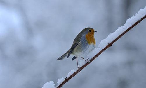 Foto Innenteil Leer Wintervogel Unsere heimischen Vögel im Winter